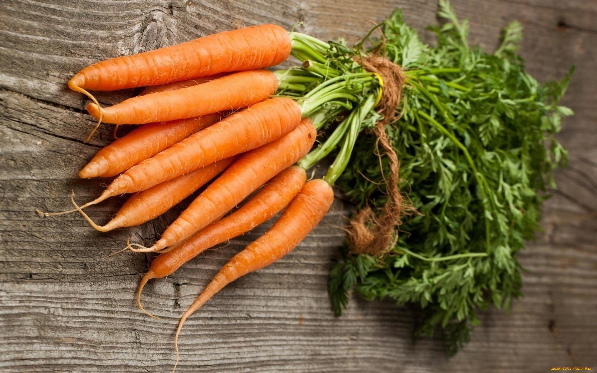 корнеплода моркови картинки когда-нибудь видели архивные